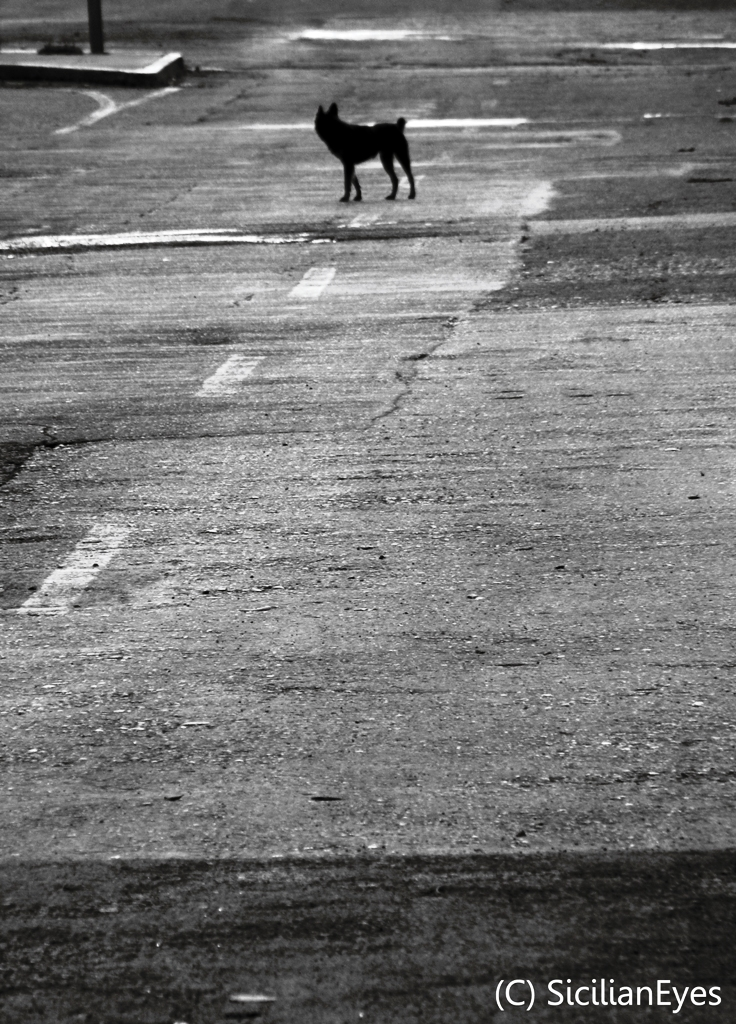 Alone in the road..