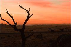 alone @ sunset