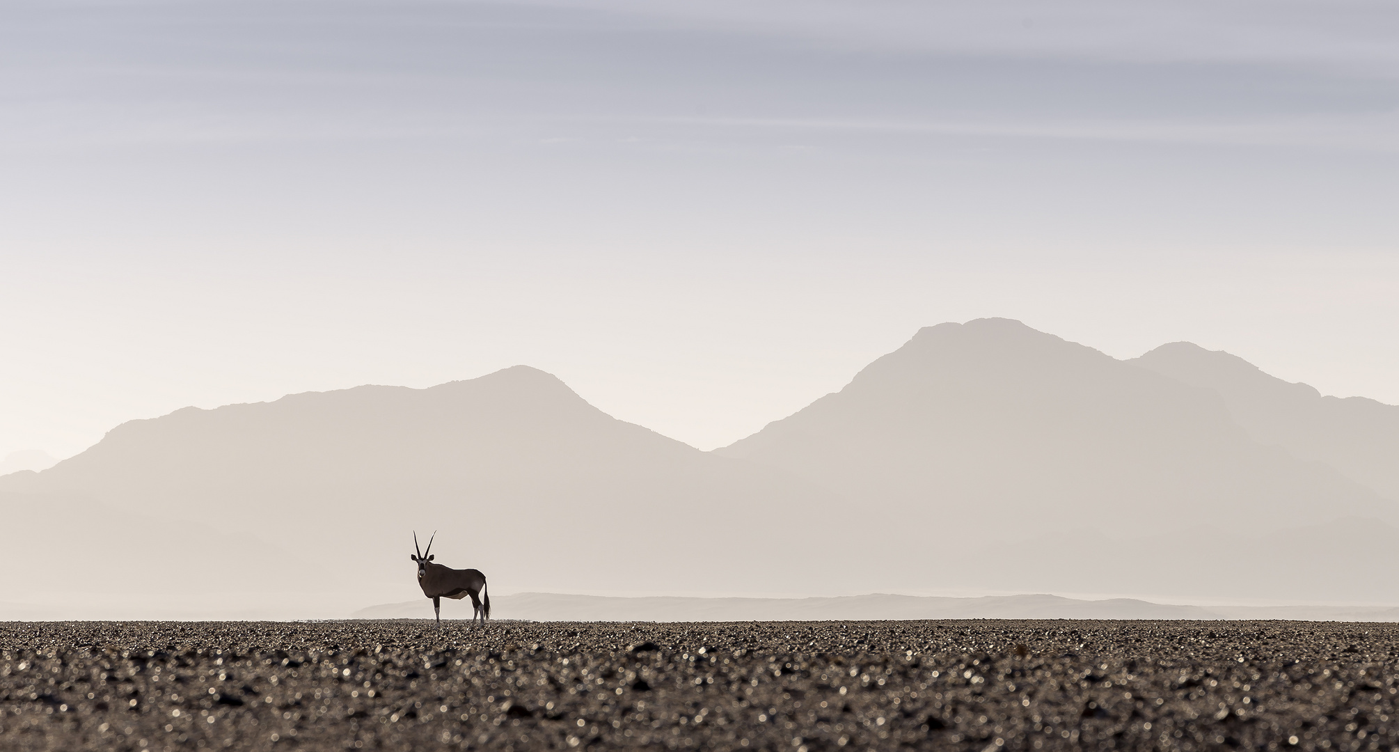 Alone with the Oryx in the Namib
