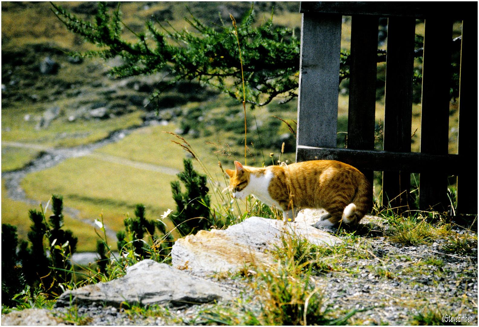 Alp-Cat