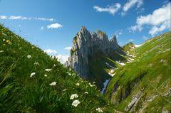 Alpenblumen vor der Saxer Lücke