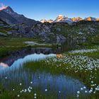 Alpenglühen und Wollgras