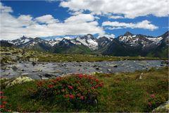 Alpenrosengarten
