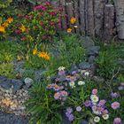 Alpine Raritäten für Flachlandgärten die ein farbenfrohes Bild abgeben