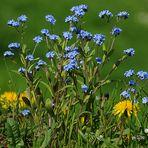 Alpiner Frühling