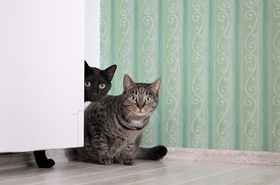 als Abwechslung zwei neugierige Katzen