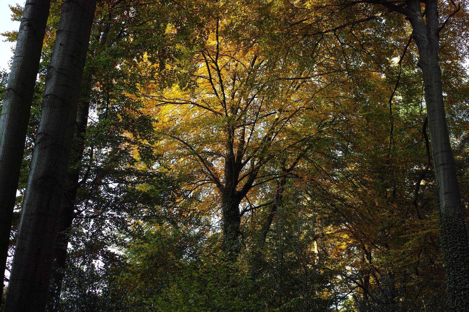 Als der Herbst noch blühte (Teil 4)