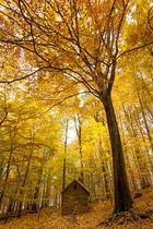 Als der Herbst noch ein Goldener sein durfte