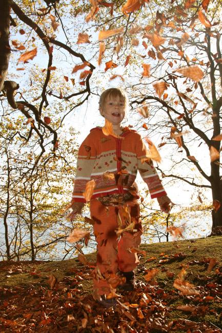 Als die Blätter flogen...