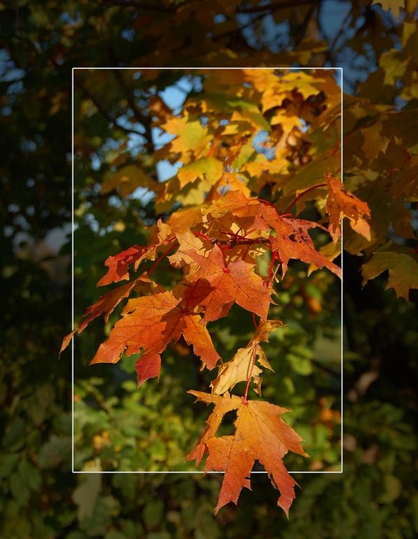 ...als die Blätter noch bunt waren...