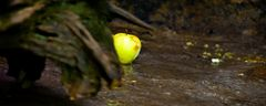 Als Eva oder Adam?  den Apfel aß....begann alles.... #1354