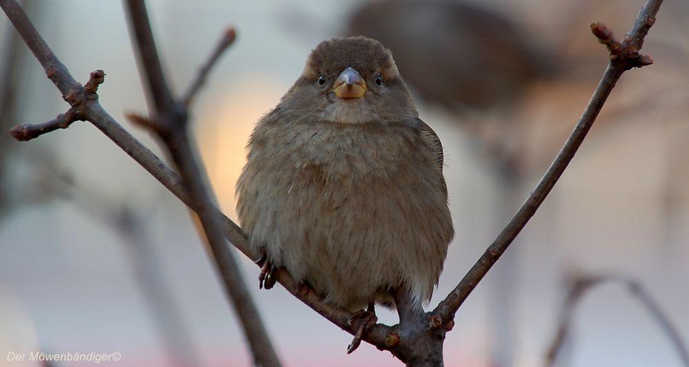 Als hätte ich es geahnt , es gibt ausser Möwen auch andere Vögel