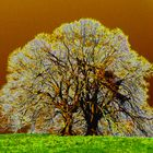 Alt Baum