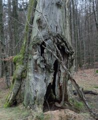 Alt ist der Baum