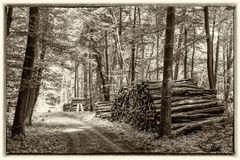 Alt wie der Wald :-)