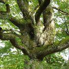 Alt wie ein Baum.......