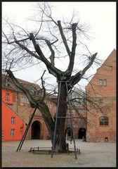 ...alt wie ein Baum...