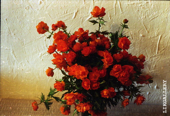 Altay fleurs.