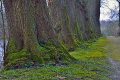 Alte Bäume