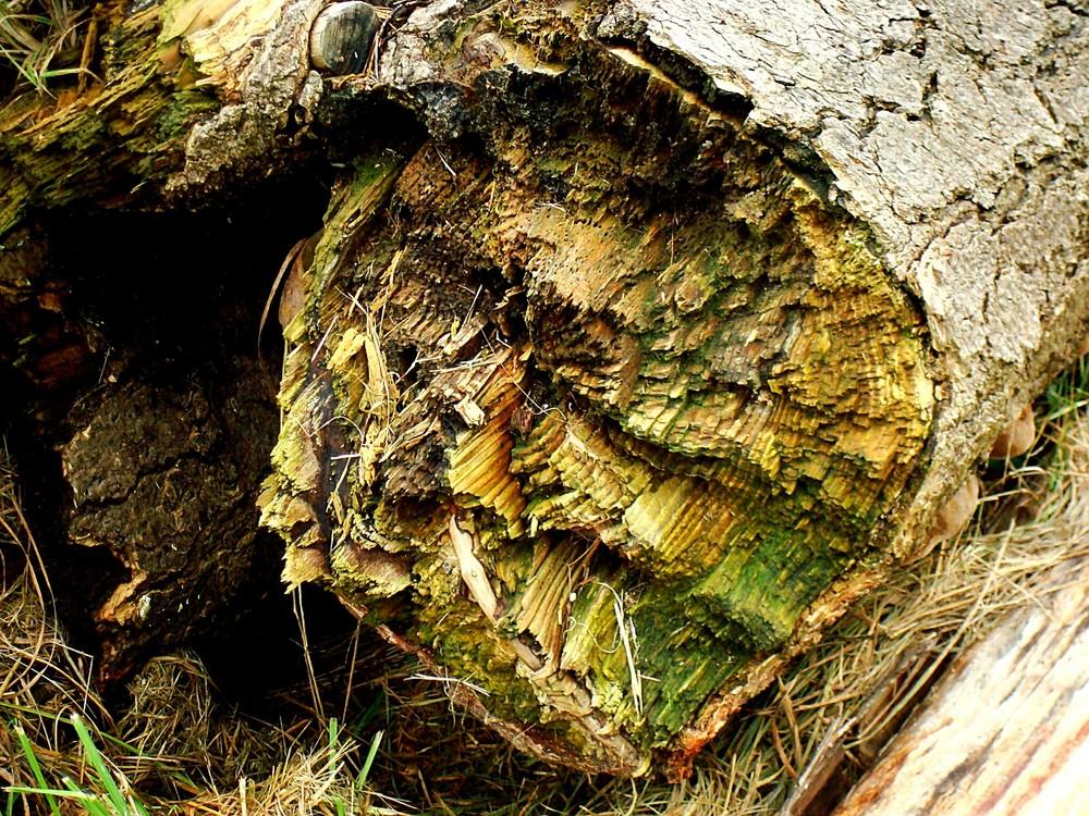 Alte Bäume 4