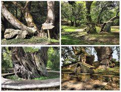 Alte Bäume am Profitis Ilias