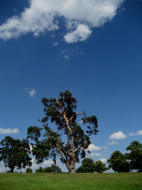 Alte Bäume bei Frischborn (2)