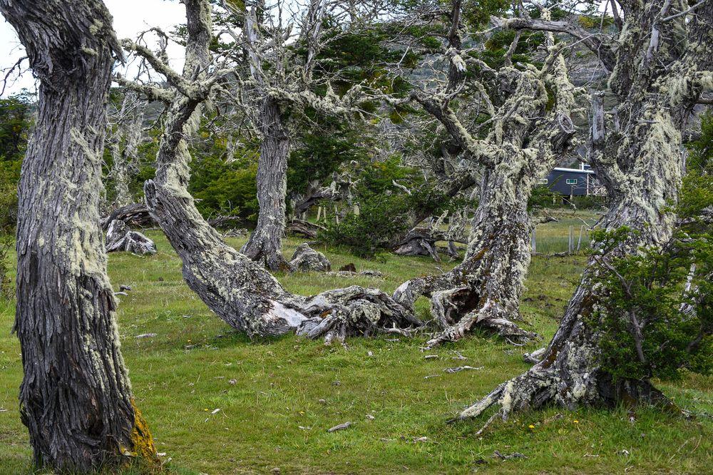 Alte Bäume                                 DSC_6086-3