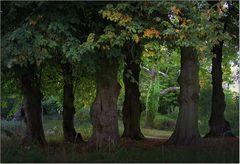 Alte Bäume im Linné-Park Petzow