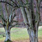 alte Baumgesellen über die  Jahre ...und immer wieder schön