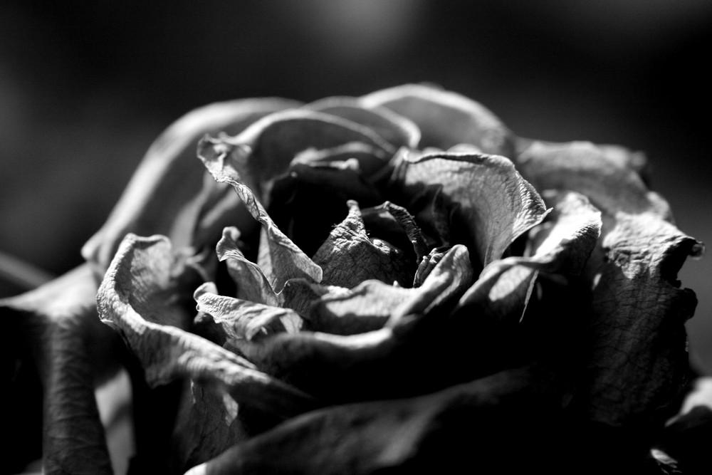 alte Blüte