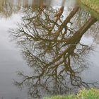 Alte knochige Bäume