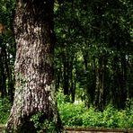 alte Kraftplätze in der Natur