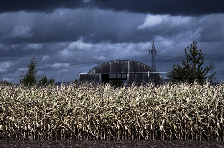 alte Scheune und Maisfeld bei Gewitterstimmung