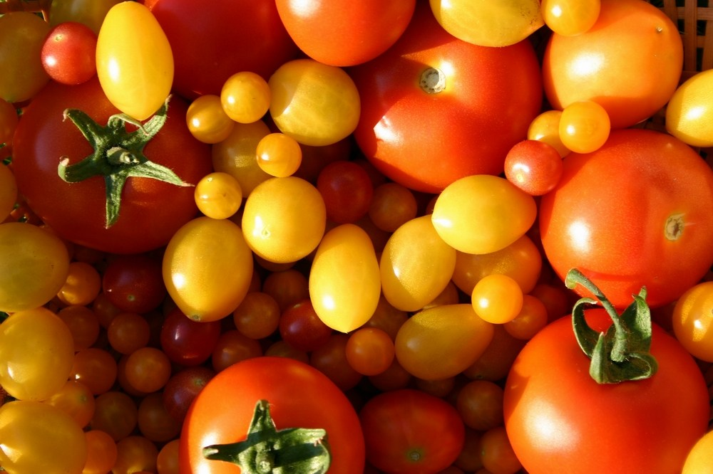 Alte Tomatensorten Verboten