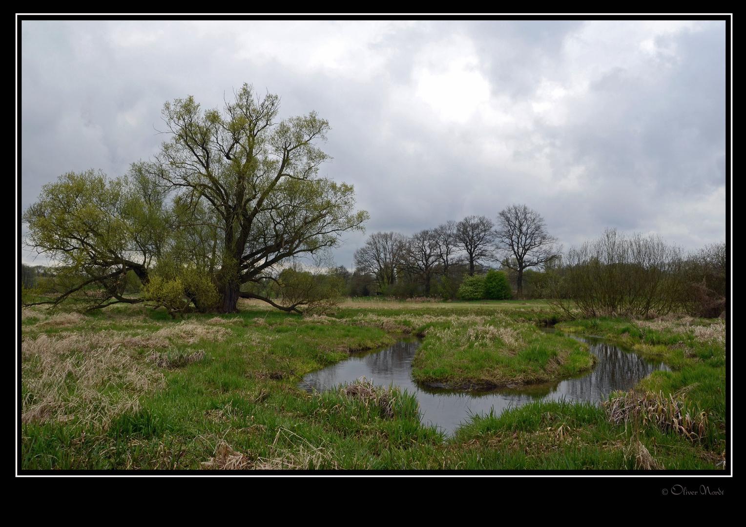 Alte Weide am Tegler Fließ