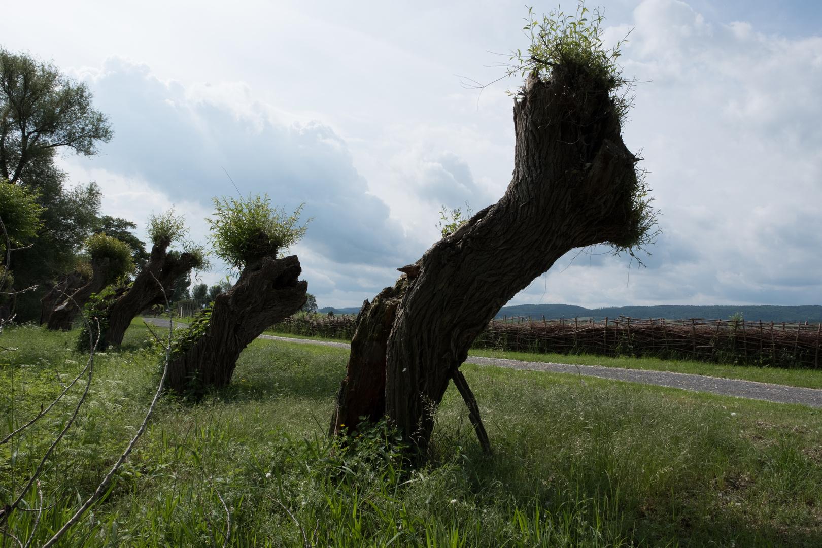 Alte Weiden