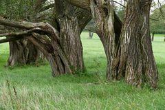 Alte Weiden...