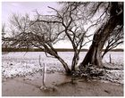 alter Baum II