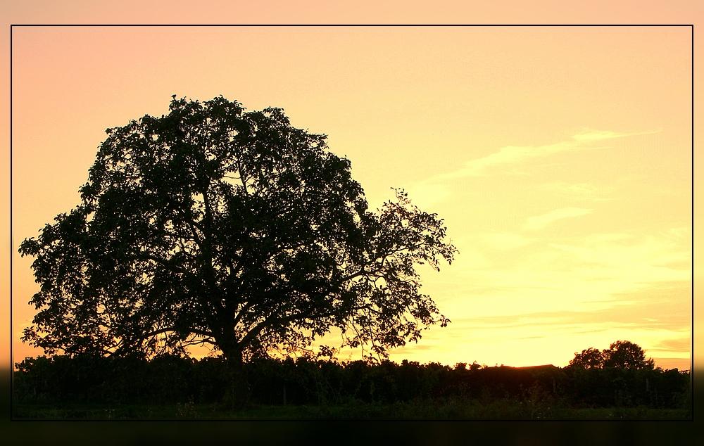 Alter Baum im Abendlicht
