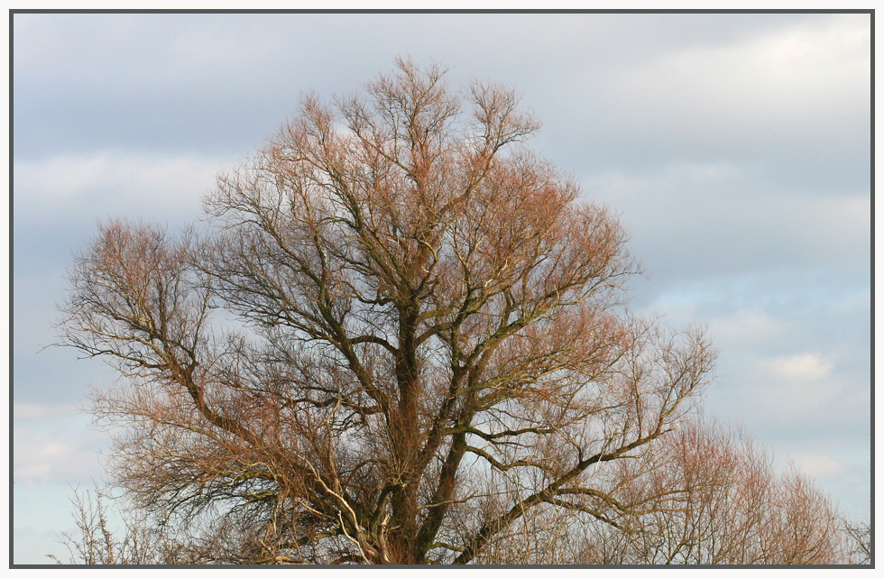 Alter Baum im Sonnenlicht