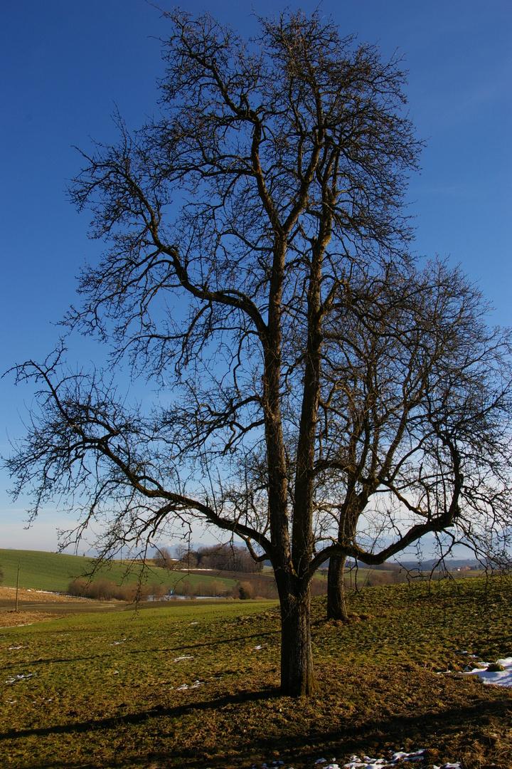 Alter Baumbestand hat wieder einen harten Winter überstanden.