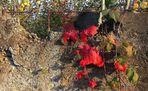 Alter Beton, junger Herbst