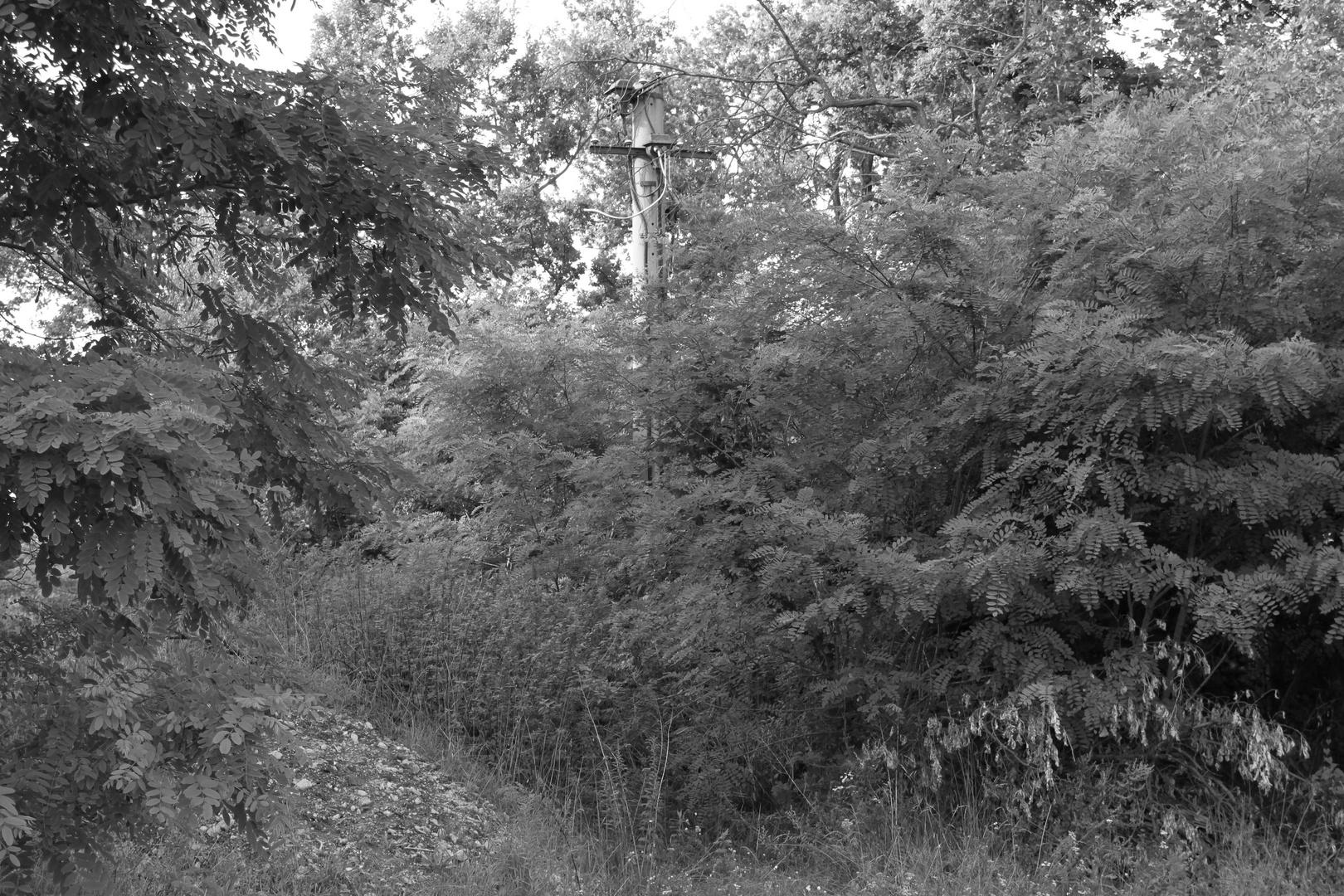 Alter Lichtmast im Neuen Lager Königsbrück