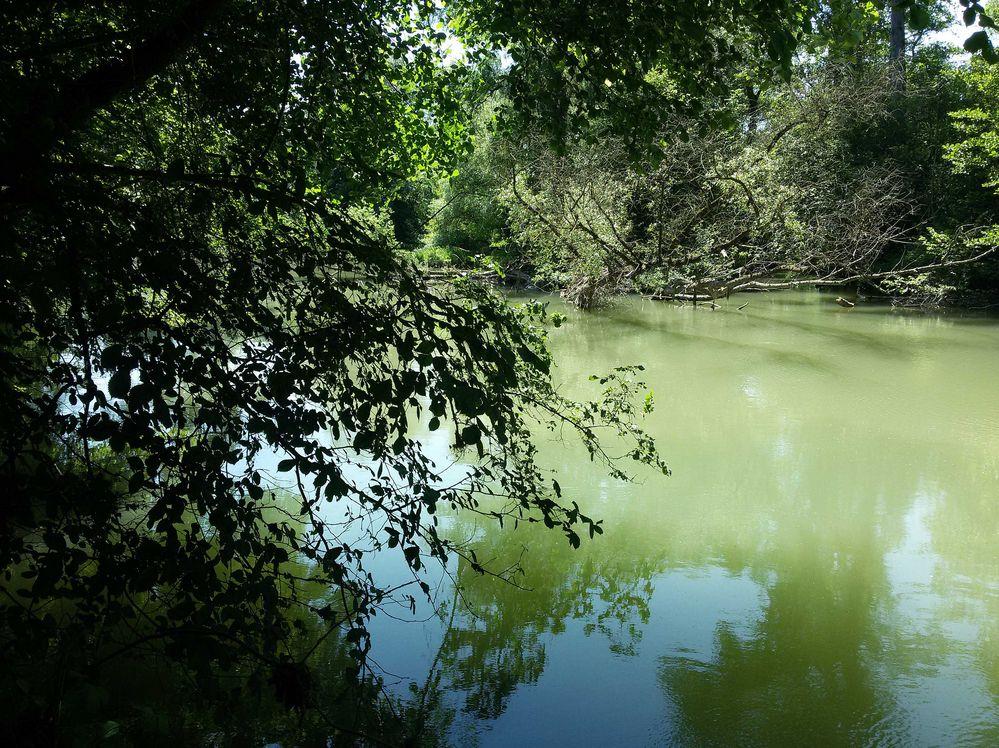 alter Rheinarm Lagune