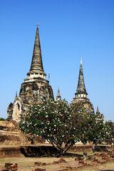 Alter Tempel und blühende Bäume