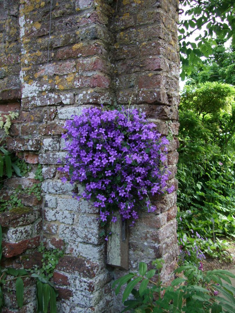 Altes Gemäuer mit blauen Blüten