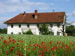 Altes Haus im Mohnfeld