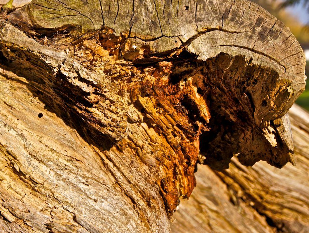 altes Holz...