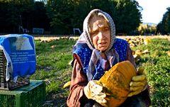 Altes Mütterchen bei der Kürbiskernernte!
