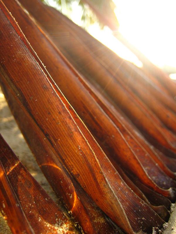 altes Palmenblatt